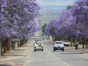 Cars driving on the street of Pretoria near jacaranda trees one-day Pretoria tours